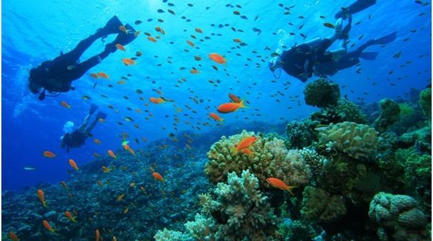 Scuba Diving Oman