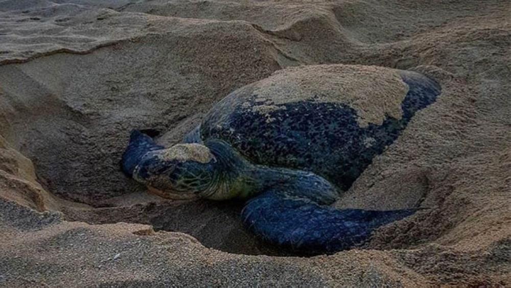 Ras Al Jinz Turtle Reserve in Oman